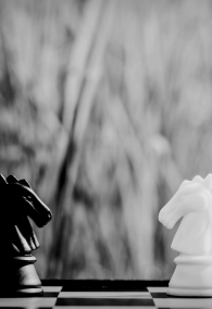 black and white horse chess stand encounter on a chessboard. - Business winner and fight concept.